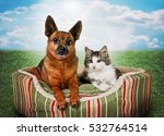 a cute kitten and chihuahua mix ... | Shutterstock . vector #532764514