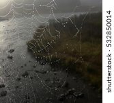 Small photo of Detailed water droplets accent a huge spider web after a morning summer rain in Yellowstone National Park.