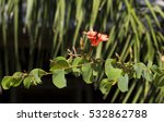 Decorative Brick Red Flowers O...