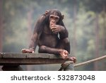 baby chimpanzee at a zoo in... | Shutterstock . vector #532873048