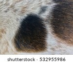 Detail Of A Two Colored Dog Fu...