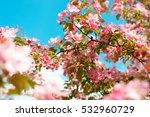 pink apple flowers. beautiful... | Shutterstock . vector #532960729