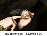 Bat Hold In Their Hands. In A...