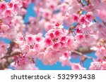 pink blossoms on the branch... | Shutterstock . vector #532993438