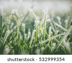 Photo Shows Frost  Freezing An...