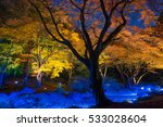 night view of maple  in japan | Shutterstock . vector #533028604