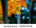 autumn color in japan | Shutterstock . vector #533043298