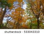autumn color in japan | Shutterstock . vector #533043310