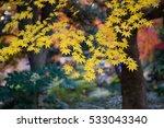 autumn color in japan | Shutterstock . vector #533043340