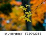 autumn color in japan | Shutterstock . vector #533043358