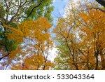 autumn color in japan | Shutterstock . vector #533043364