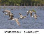 birds flying across the water...