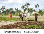 Cuban Farmer Plows His Field...