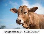 Calf Face   Selective Focus