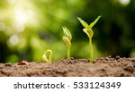 germinating seed to sprout of... | Shutterstock . vector #533124349