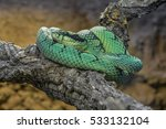 A Green Snake On A Branch