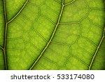 leaves macros | Shutterstock . vector #533174080