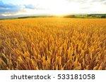 Sunrise Over The Barley Field