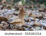 frost on leaves in winter | Shutterstock . vector #533181316