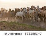 herd of running horses.   Shutterstock . vector #533255140