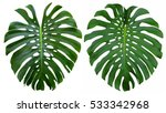 monstera large tropical jungle... | Shutterstock . vector #533342968