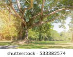big tree with and green field... | Shutterstock . vector #533382574