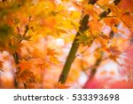 soft  de focused autumn leaves...   Shutterstock . vector #533393698