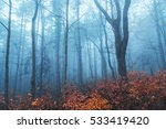 magical foggy seasonal forest... | Shutterstock . vector #533419420