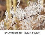 a branch of hoarfrost | Shutterstock . vector #533454304