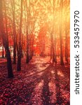 forest falls color forest ... | Shutterstock . vector #533457970