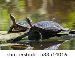 two tortoises are on the island ... | Shutterstock . vector #533514016