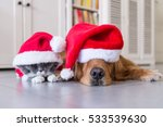 Stock photo wearing a christmas hat of dogs and cats 533539630