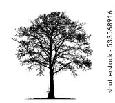 tree without leaves vector... | Shutterstock .eps vector #533568916