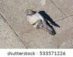 pigeon | Shutterstock . vector #533571226