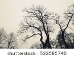Leafless Bare Trees Over Gray...