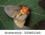 butterfly on leaf. | Shutterstock . vector #533601160