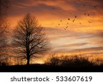 Tree In Sunset Time With Flyin...