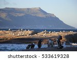 penguins and sea birds at... | Shutterstock . vector #533619328