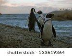penguins at boulders beach near ... | Shutterstock . vector #533619364