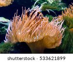 sea anemone and clown fish | Shutterstock . vector #533621899