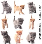 Stock photo kitten 533637454