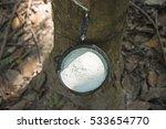 milk latex extracted from...   Shutterstock . vector #533654770