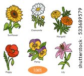 Vector Set Of Flowers  Color...