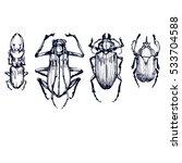 insect beetles  sketch hand... | Shutterstock .eps vector #533704588