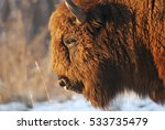 european bison  bison bonasus ... | Shutterstock . vector #533735479