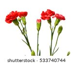 Stock photo red carnation bunch 533740744
