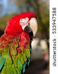 Small photo of The green-winged macaw, also known as the red-and-green , is a large, mostly-red bird of the Ara genus. This is the largest of the genus, widespread in the forests and woodlands of South America.