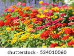 Colorful Zinnia Flowers...