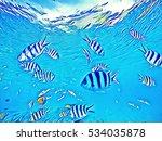 Dascillus Fish School In Blue...
