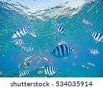 Dascillus Fish School In Sea...